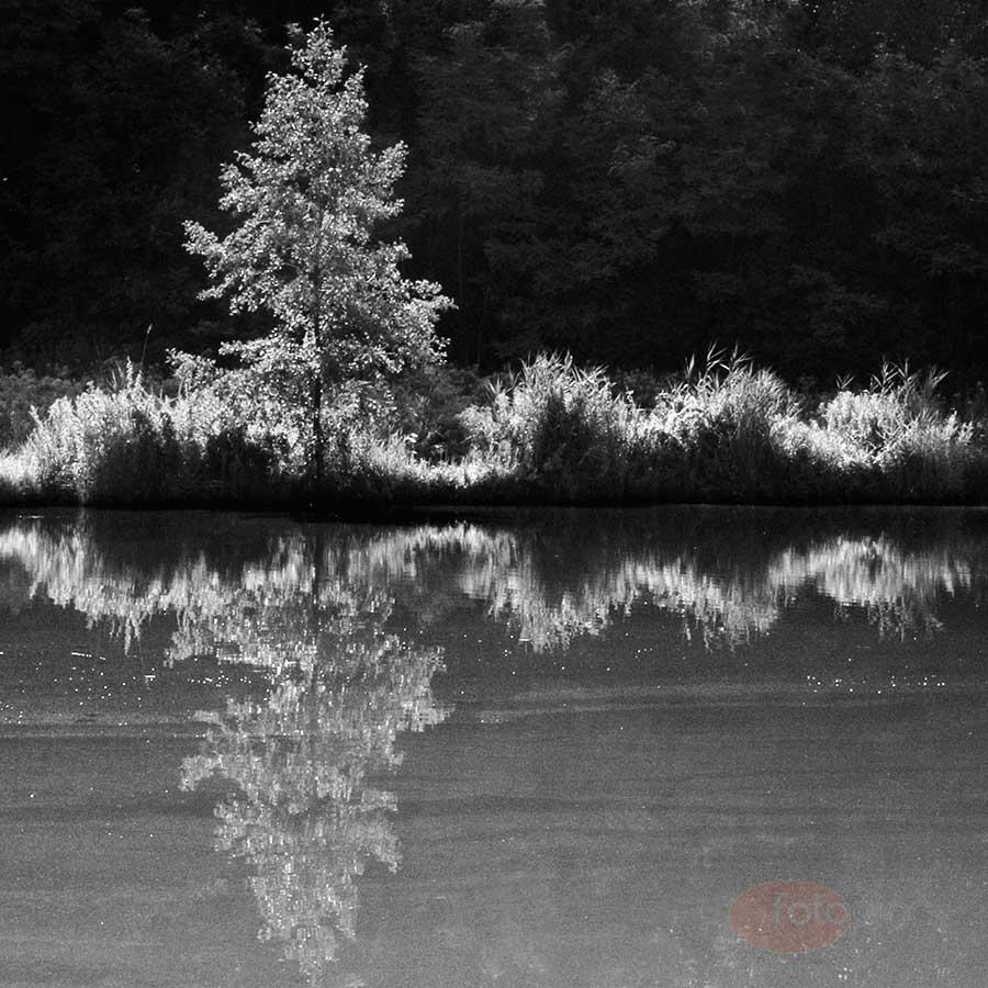 A horizont jelentősége a tájképben: Amikor elfogadott a középen megosztott kép, hiszen a két fél összetartozik, még ha egymáshoz képest eltérően is látszanak a képen. A vágással erőteljesen oldalra helyezett fa billenti ki a képet a sematikus állapotból.